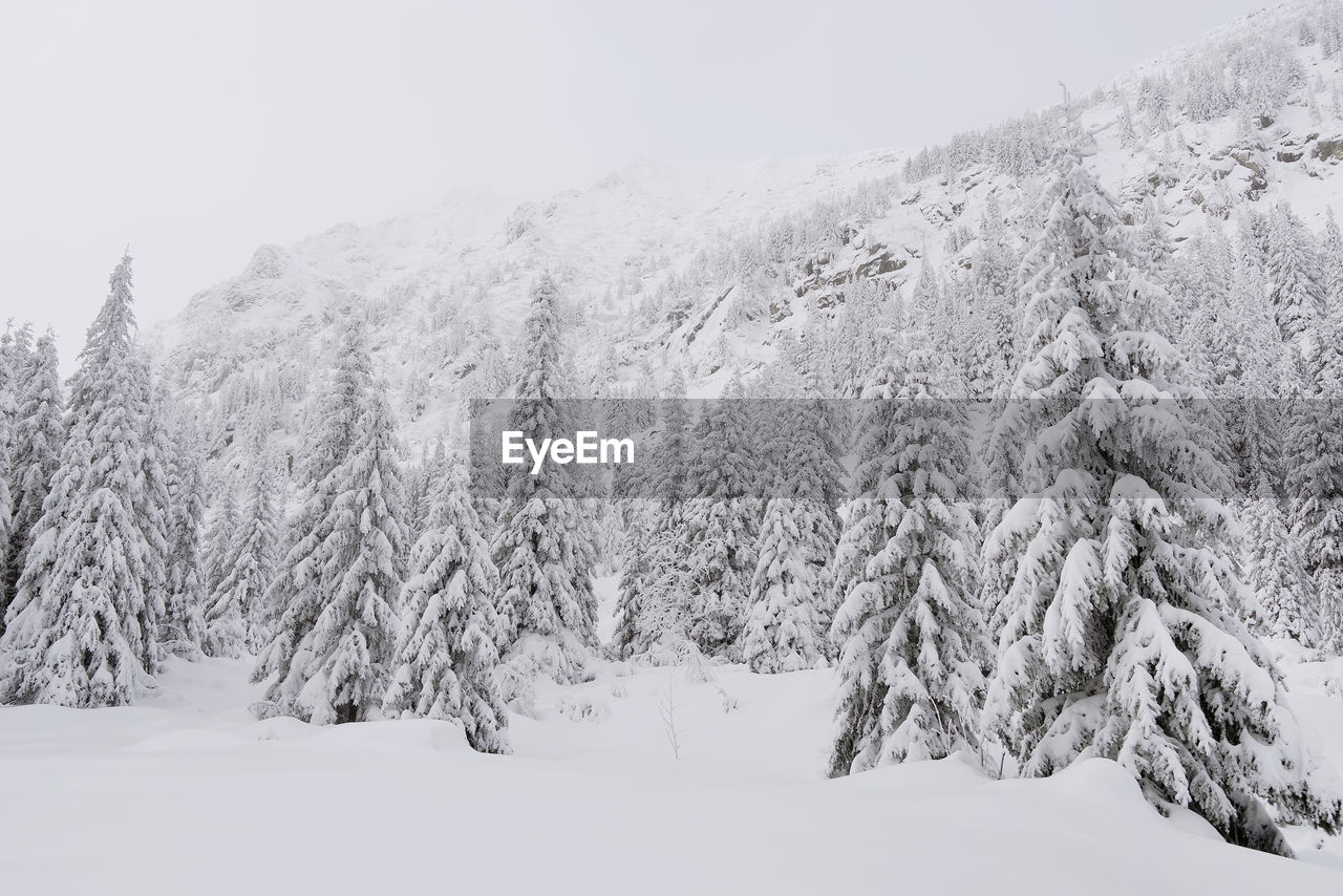 winter, cold temperature, snow, beauty in nature, tree, tranquility, tranquil scene, plant, scenics - nature, covering, no people, nature, day, white color, sky, land, environment, mountain, non-urban scene, snowcapped mountain, coniferous tree, snowing