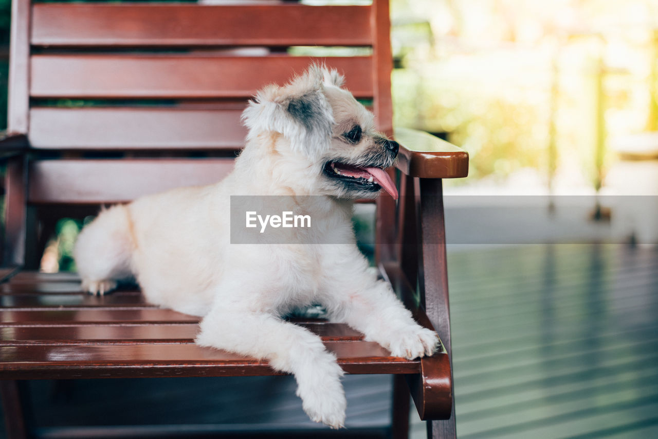 one animal, domestic, pets, domestic animals, mammal, animal themes, animal, canine, dog, vertebrate, no people, focus on foreground, looking, looking away, seat, relaxation, day, chair, indoors, side view