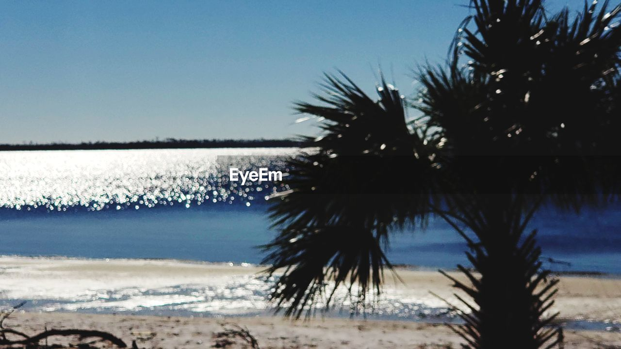 sky, water, sea, beach, tree, land, plant, beauty in nature, palm tree, tranquility, tropical climate, scenics - nature, nature, tranquil scene, growth, no people, day, clear sky, focus on foreground, outdoors, palm leaf, coconut palm tree