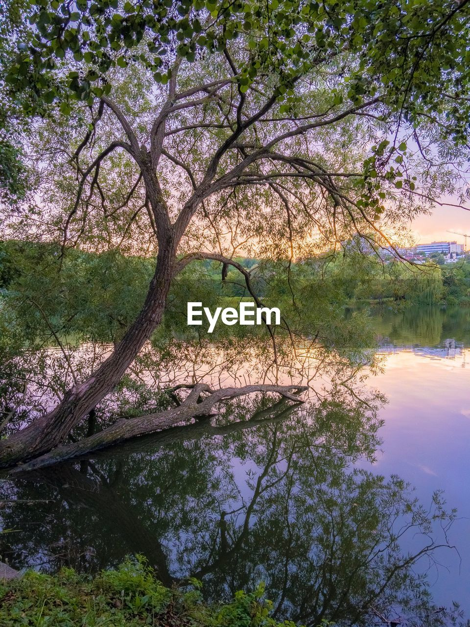 tree, nature, beauty in nature, tranquility, tranquil scene, scenics, reflection, water, outdoors, lake, day, no people, branch, landscape, bare tree, sky