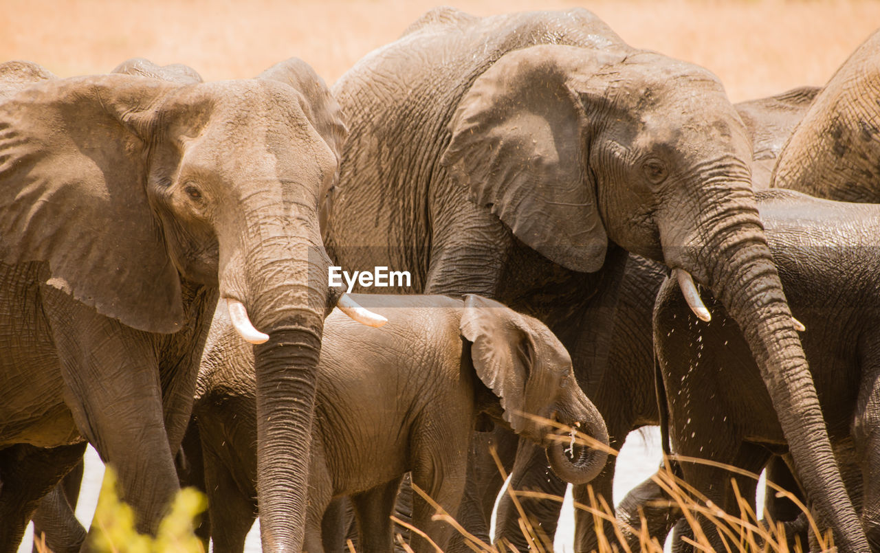 Elephants Standing On Field At National Park