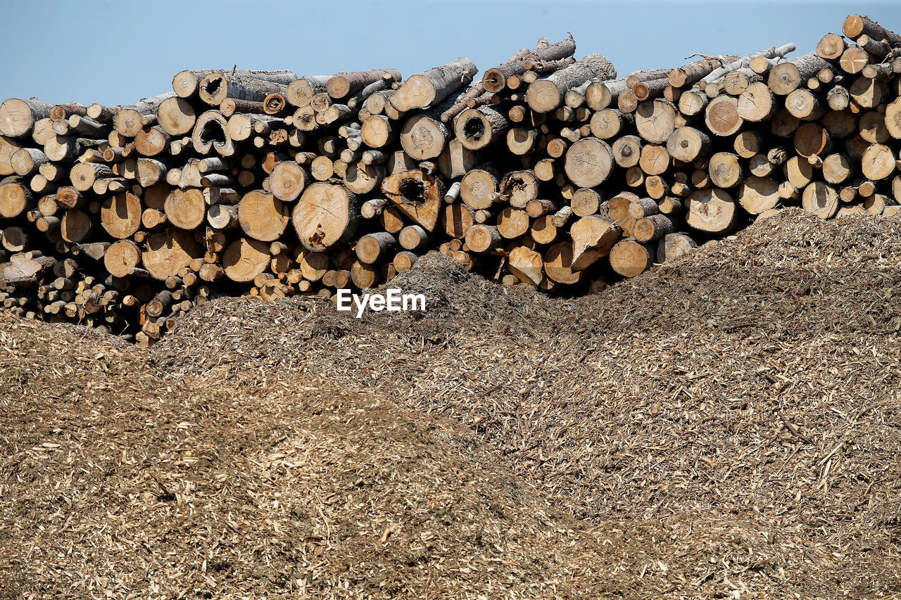 STACK OF FIREWOOD IN FOREST