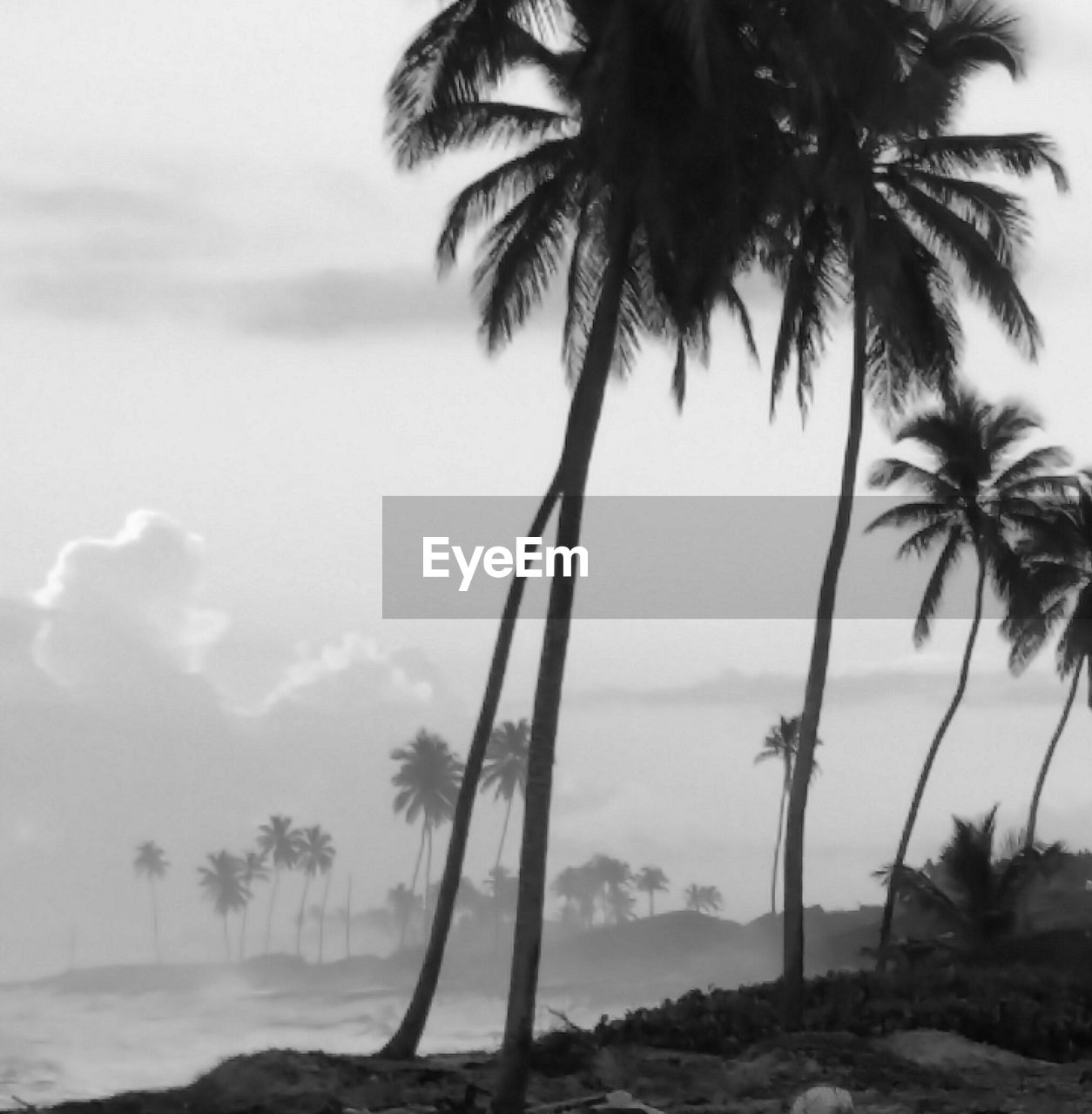 tree, palm tree, nature, tranquility, beauty in nature, tranquil scene, tree trunk, scenics, outdoors, day, sky, growth, no people, landscape