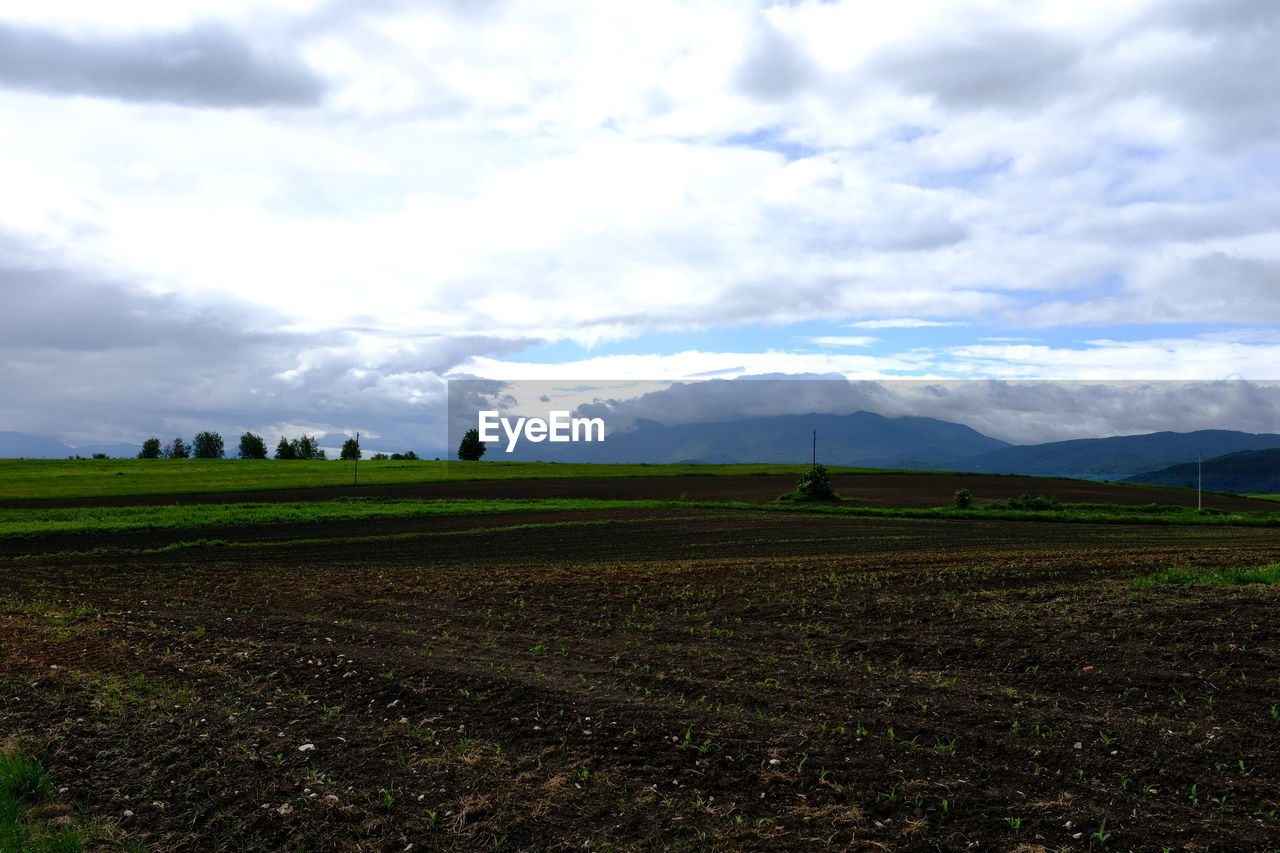 sky, cloud - sky, environment, landscape, scenics - nature, land, beauty in nature, field, tranquil scene, tranquility, nature, rural scene, plant, day, agriculture, no people, non-urban scene, green color, outdoors, grass, plantation