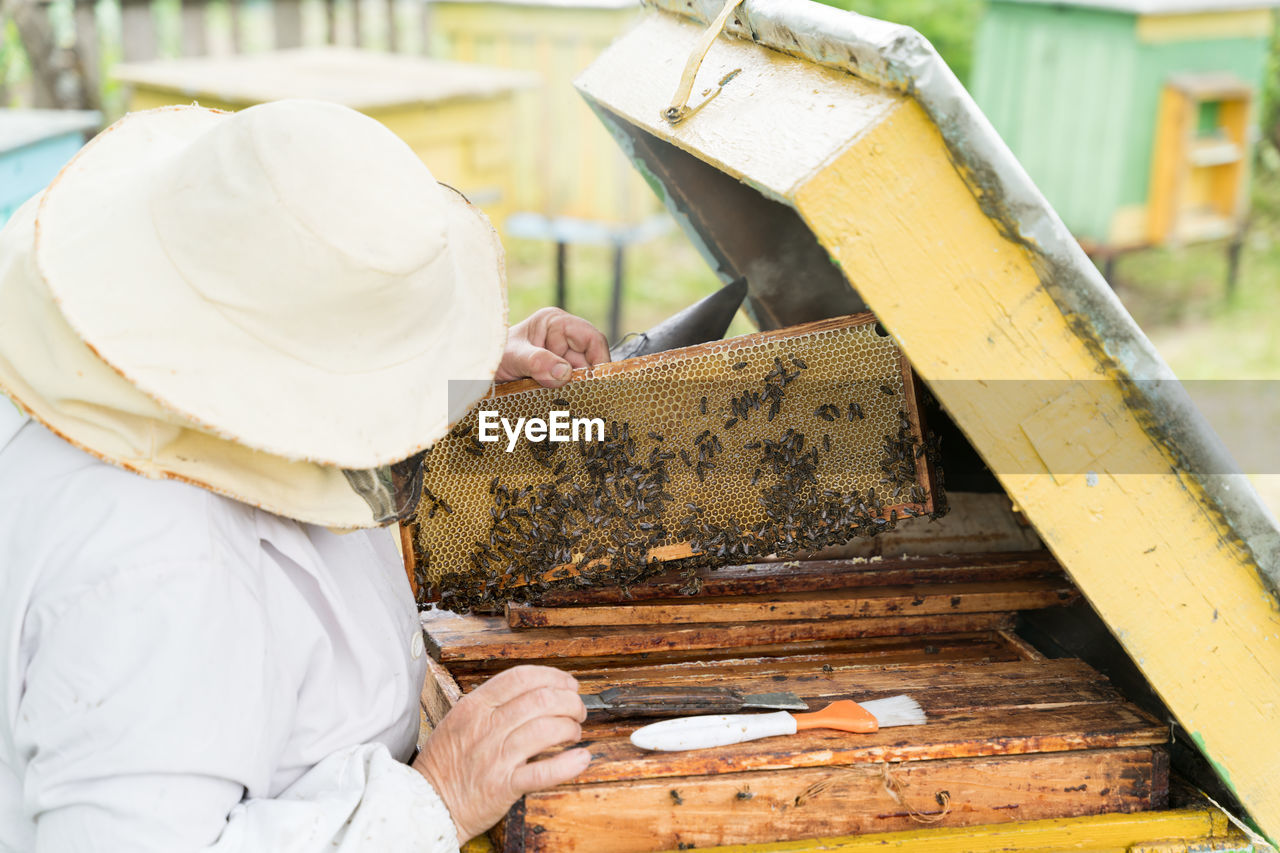 Beekeeper holding tray of honeycomb at park