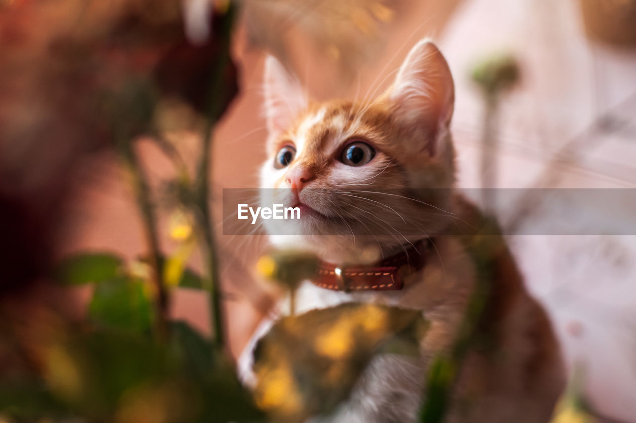animal themes, mammal, one animal, animal, pets, domestic, domestic animals, vertebrate, selective focus, cat, whisker, feline, domestic cat, close-up, no people, looking away, focus on foreground, day, looking, animal head
