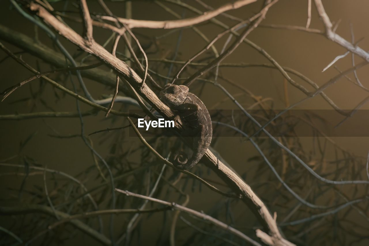 Chameleon On Tree At Zoo