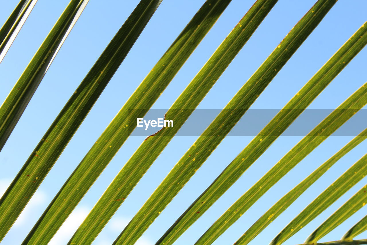 sky, no people, nature, green color, clear sky, low angle view, pattern, plant, day, blue, backgrounds, growth, outdoors, beauty in nature, full frame, tree, close-up, sunlight, grass, metal, palm leaf