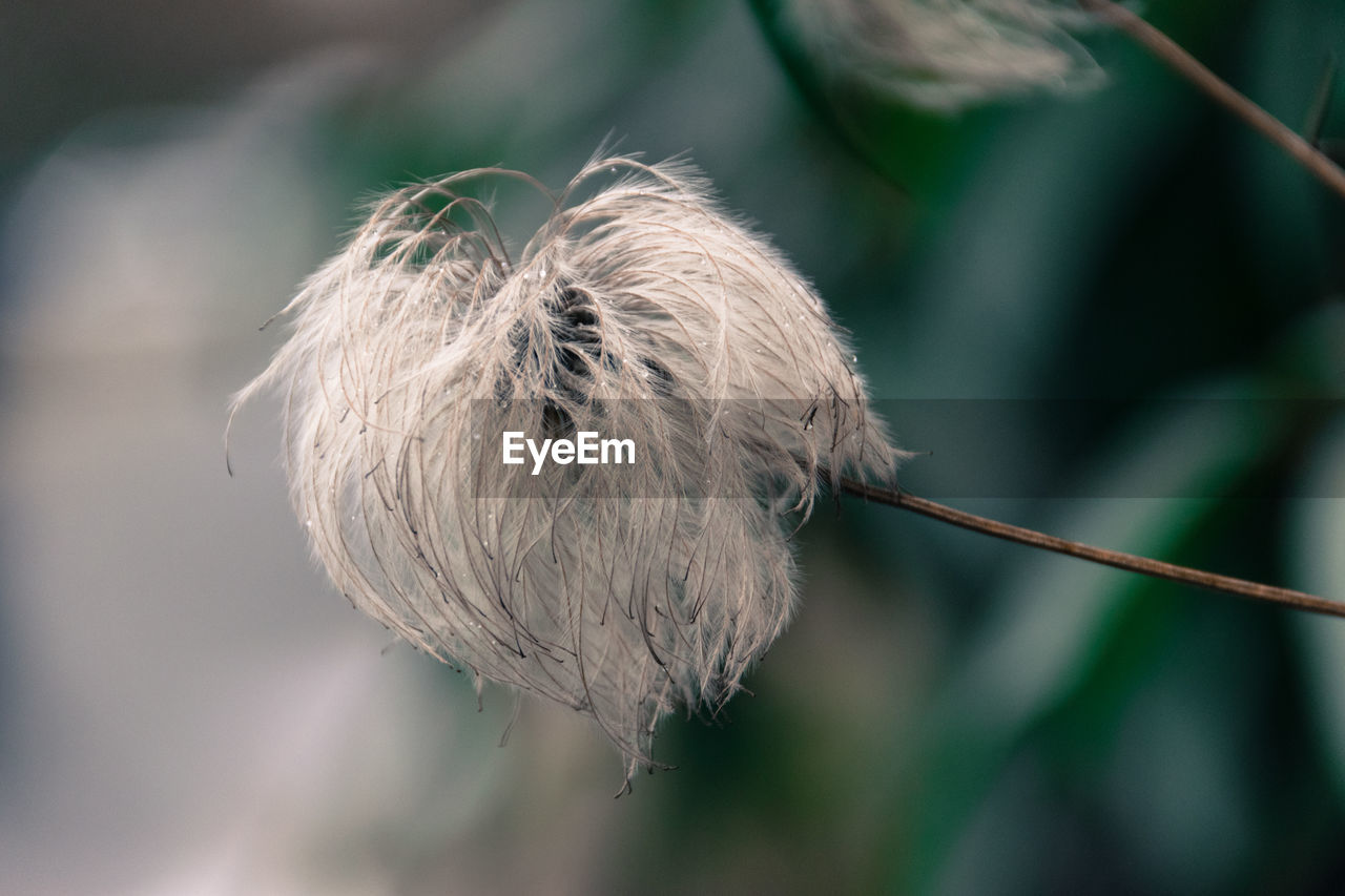 Close-Up Of Milkweed Grass Outdoors