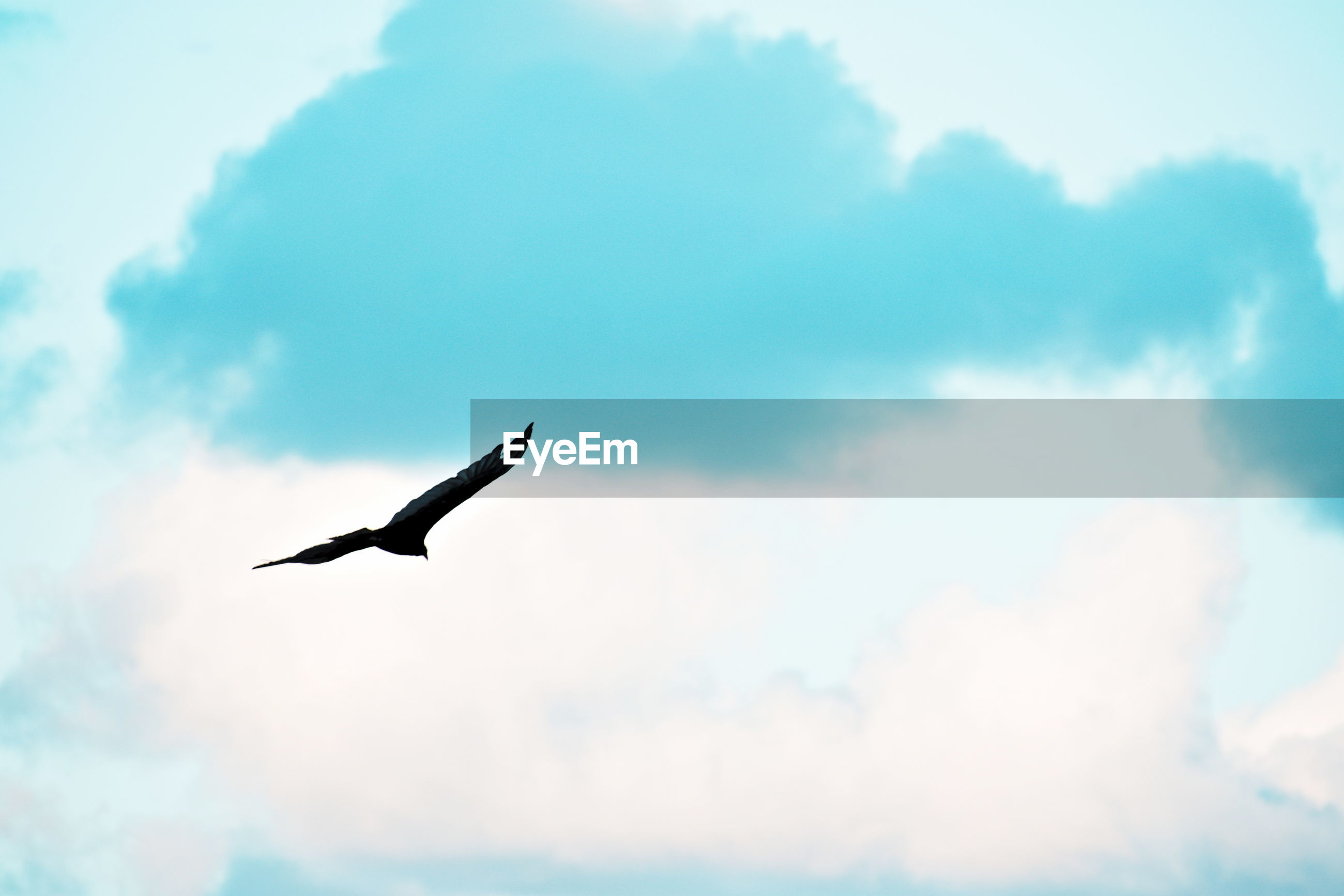 LOW ANGLE VIEW OF A BIRD FLYING