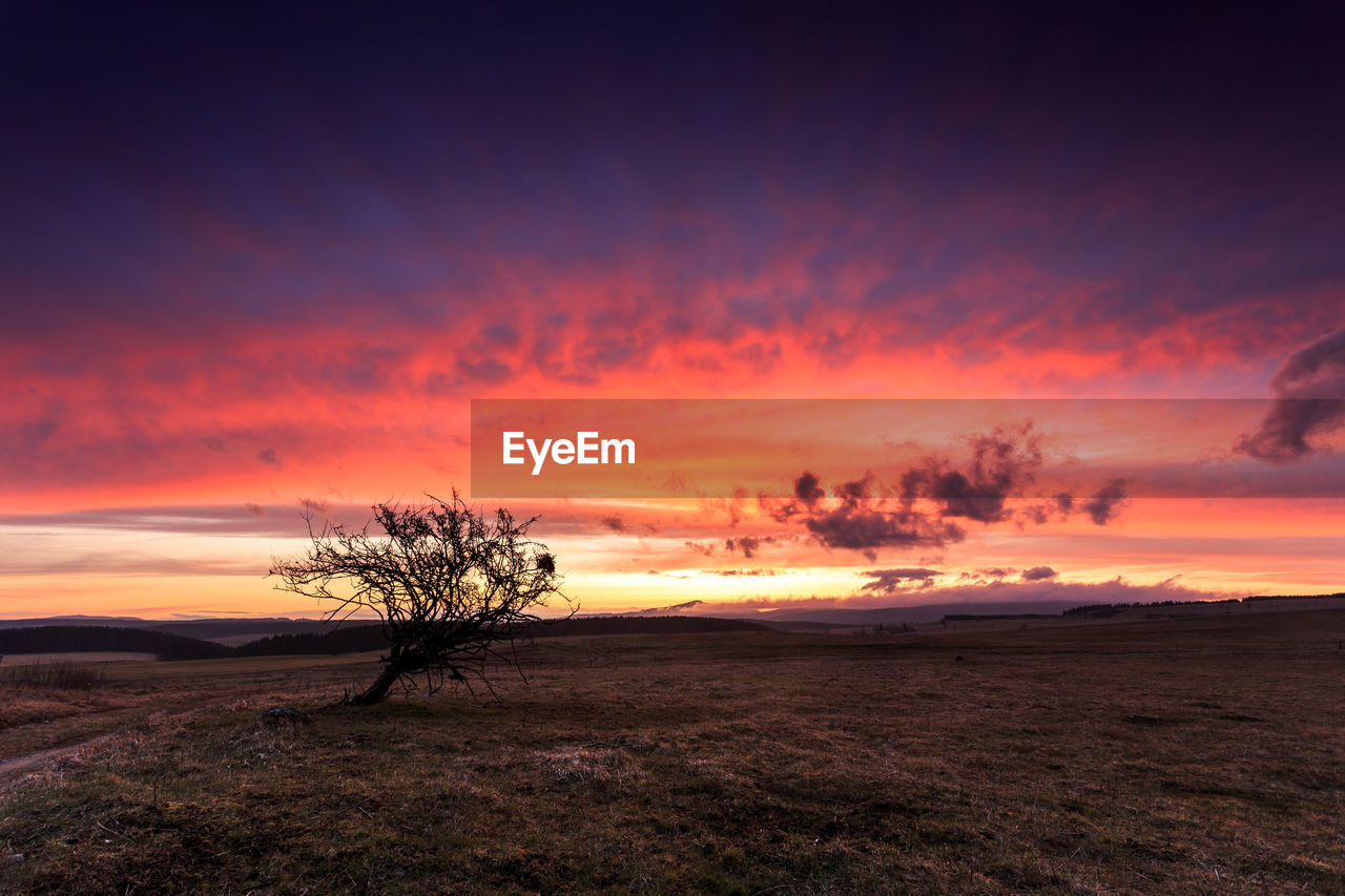 sunset, sky, beauty in nature, cloud - sky, tranquility, tranquil scene, scenics - nature, orange color, environment, tree, landscape, land, field, no people, nature, silhouette, plant, non-urban scene, outdoors, horizon, isolated, romantic sky