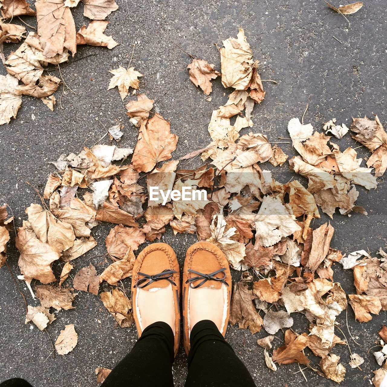low section, shoe, human leg, one person, autumn, human body part, body part, plant part, change, leaf, personal perspective, dry, real people, leaves, standing, high angle view, unrecognizable person, nature, lifestyles, day, outdoors, human foot, human limb