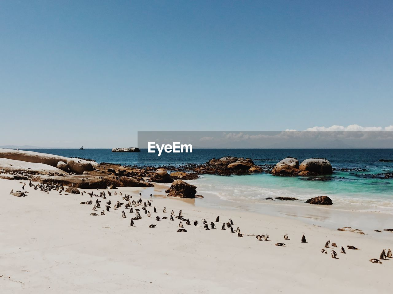 sea, water, sky, beauty in nature, horizon over water, scenics - nature, horizon, beach, clear sky, copy space, nature, land, day, large group of animals, tranquility, tranquil scene, rock, no people, idyllic, flock of birds