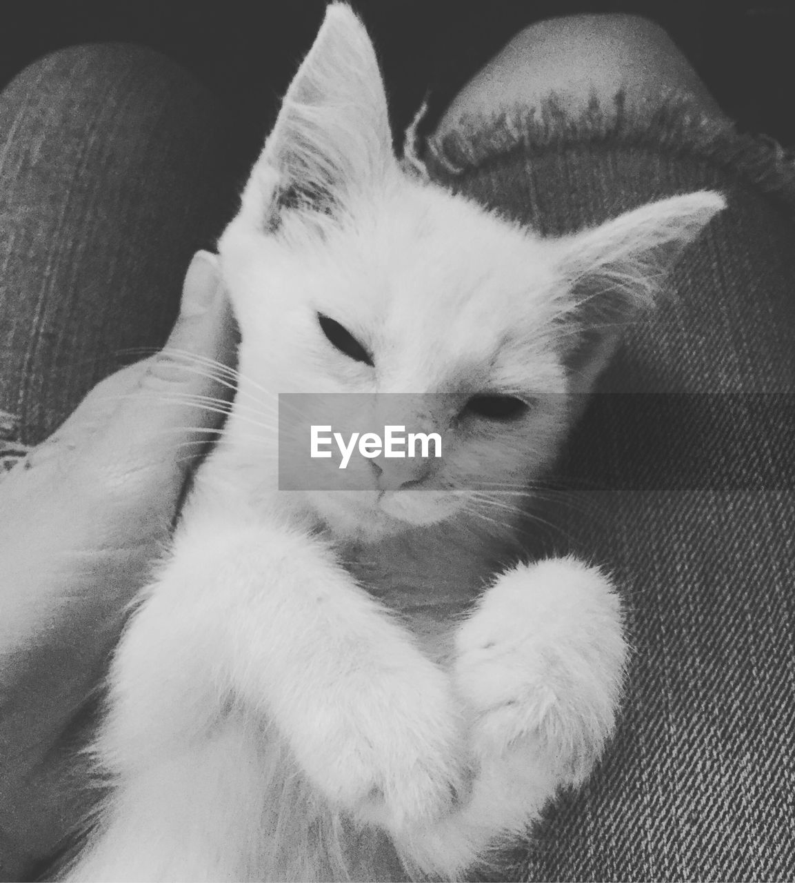 domestic cat, feline, mammal, pets, domestic animals, indoors, animal themes, human body part, one person, friendship, human hand, close-up, day, people