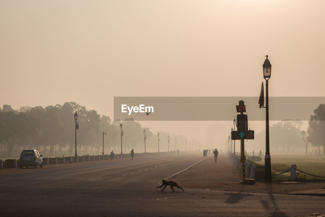 View of monkey running on road against clear sky