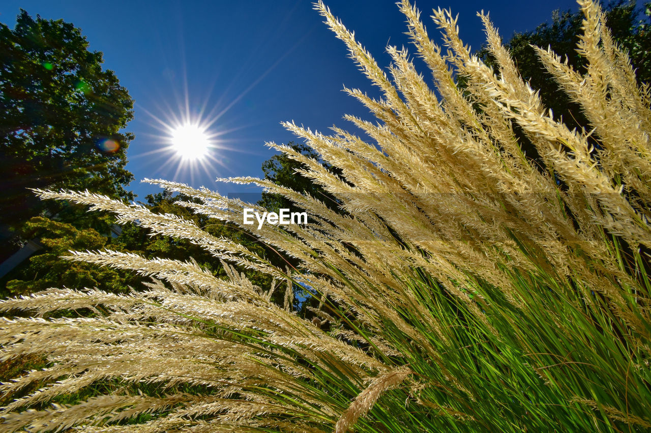 plant, sunlight, sky, sunbeam, lens flare, nature, beauty in nature, growth, sun, land, environment, day, tranquility, landscape, low angle view, field, outdoors, grass, non-urban scene, scenics - nature, bright