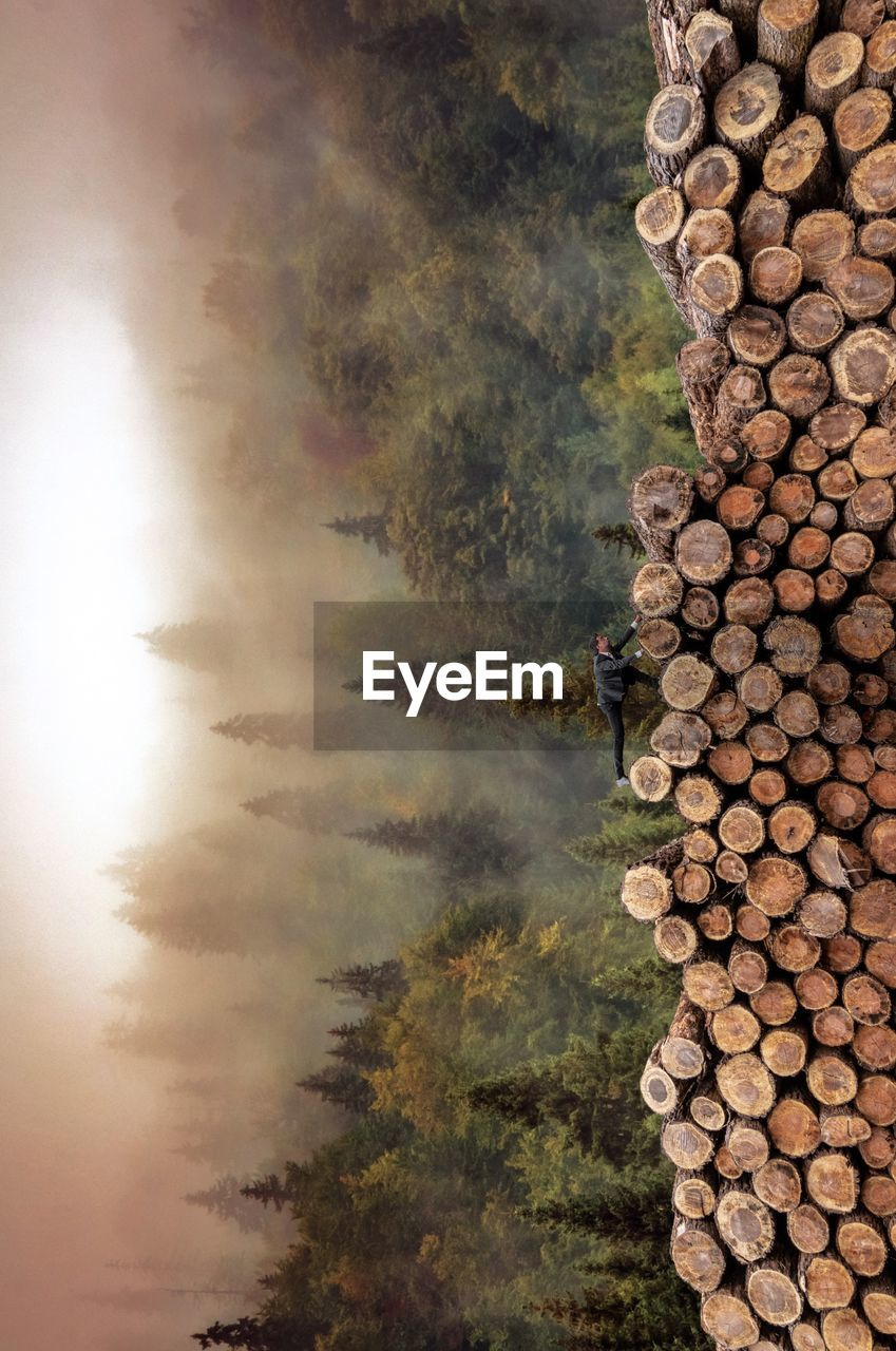 Tilt image of man on woodpile in forest during foggy weather