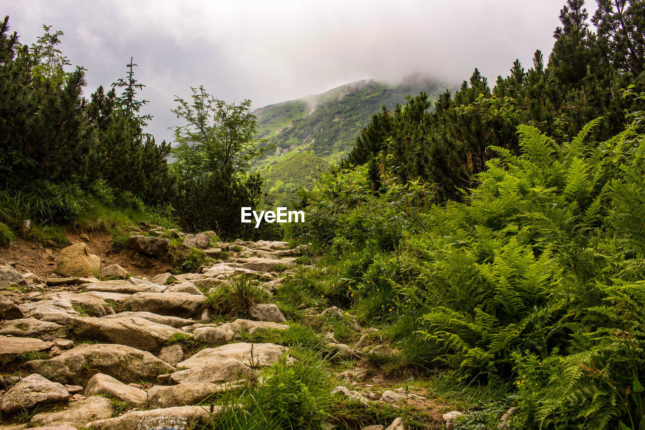 plant, tree, mountain, beauty in nature, growth, sky, scenics - nature, nature, no people, green color, tranquility, day, landscape, environment, tranquil scene, cloud - sky, non-urban scene, land, outdoors, rock, mountain range, coniferous tree