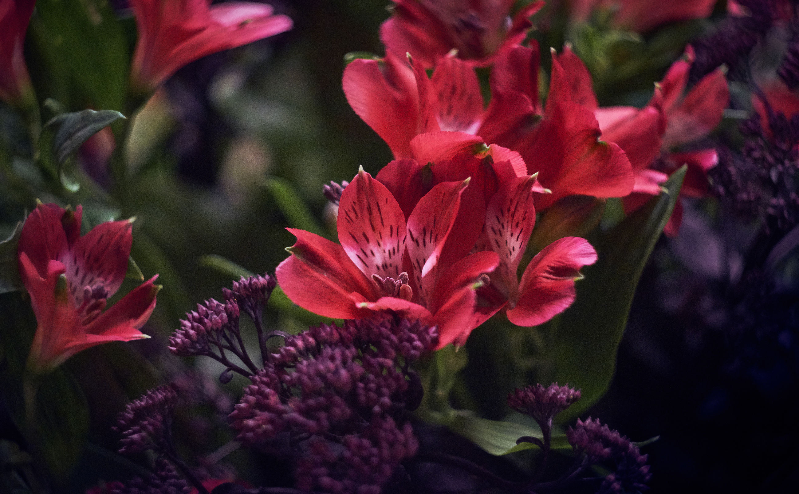 CLOSE UP OF PINK ROSE FLOWER