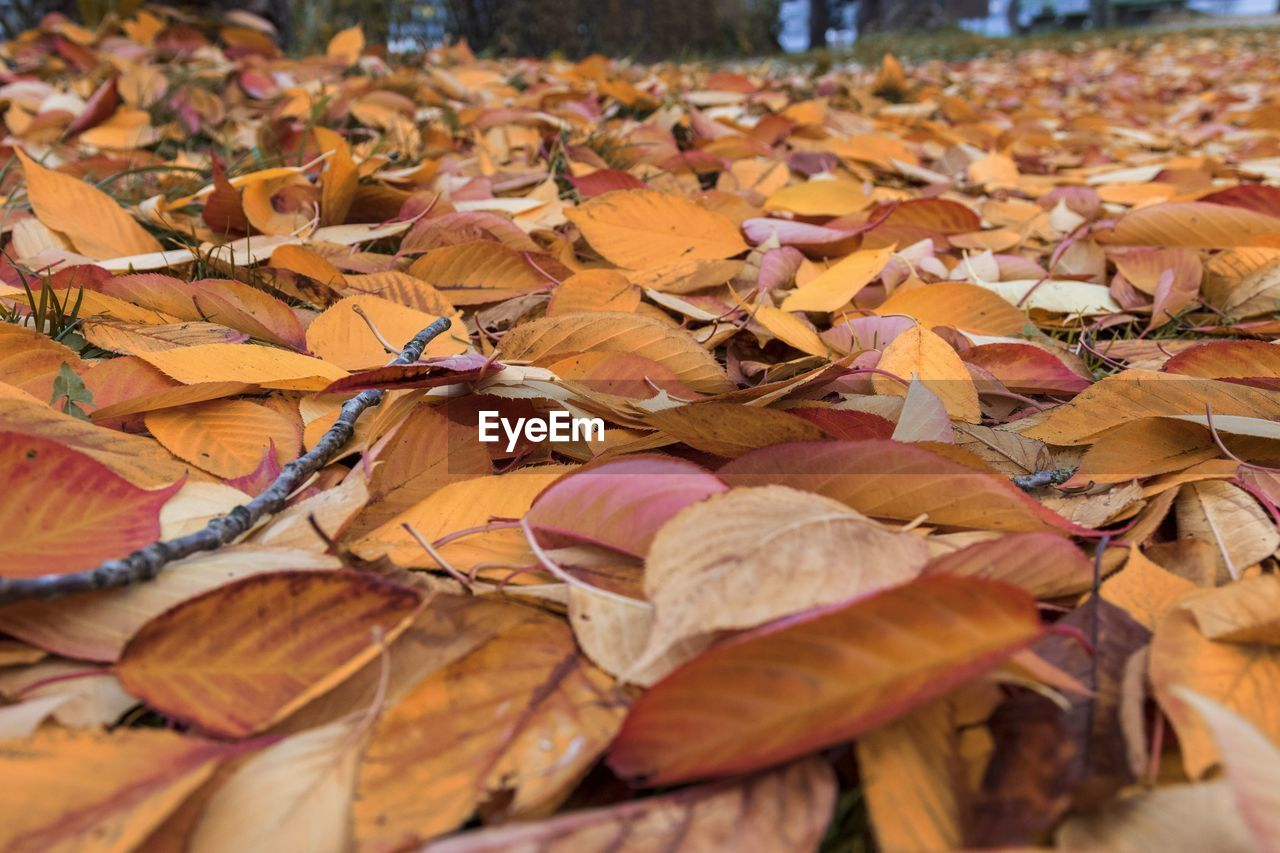 autumn, change, leaves, plant part, leaf, close-up, dry, no people, large group of objects, vulnerability, abundance, fragility, falling, nature, orange color, day, beauty in nature, selective focus, plant, field, outdoors, natural condition, fall, autumn collection, maple leaf
