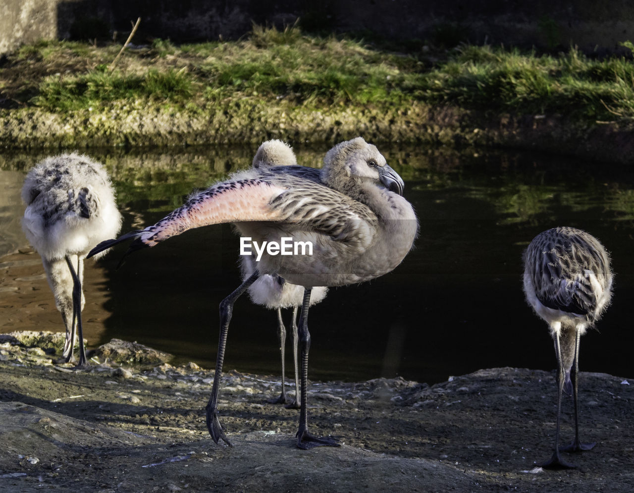 group of animals, animal, bird, animal themes, animals in the wild, animal wildlife, vertebrate, water, nature, no people, day, two animals, perching, land, outdoors, lake, focus on foreground, sunlight