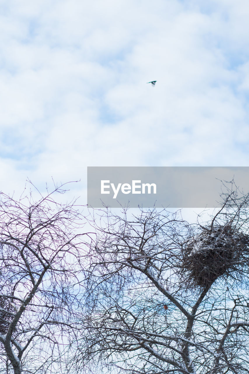 vertebrate, animal, bird, animal themes, animals in the wild, tree, animal wildlife, cloud - sky, sky, one animal, plant, flying, no people, nature, branch, bare tree, day, low angle view, beauty in nature, tranquility, outdoors, eagle