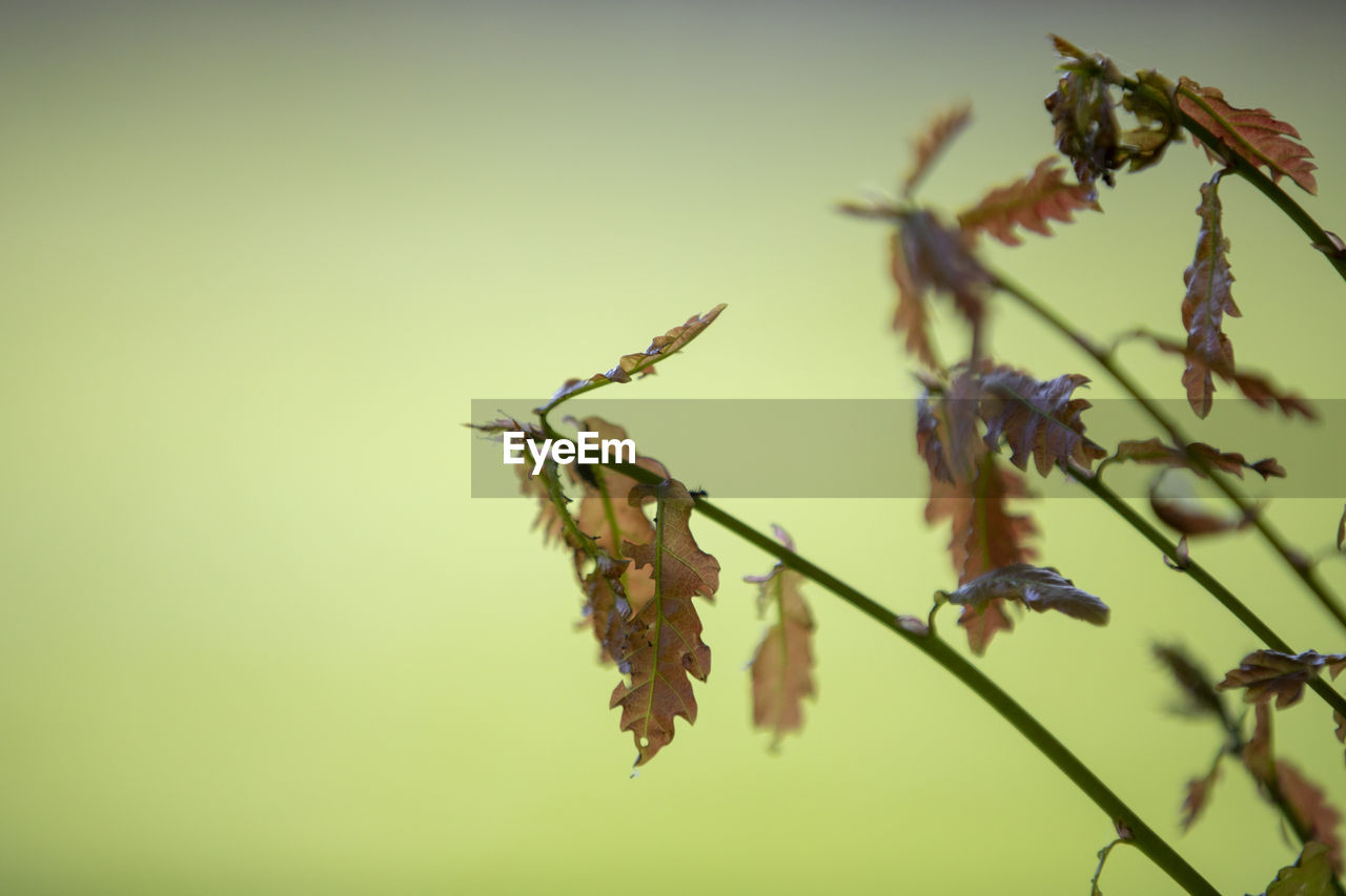plant, close-up, growth, beauty in nature, focus on foreground, no people, vulnerability, fragility, nature, tranquility, selective focus, day, flower, flowering plant, outdoors, plant stem, plant part, leaf, twig, copy space