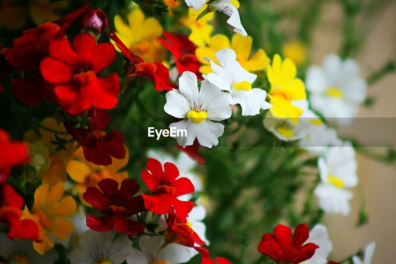 flower, petal, growth, fragility, nature, beauty in nature, blooming, freshness, flower head, focus on foreground, plant, no people, day, close-up, outdoors