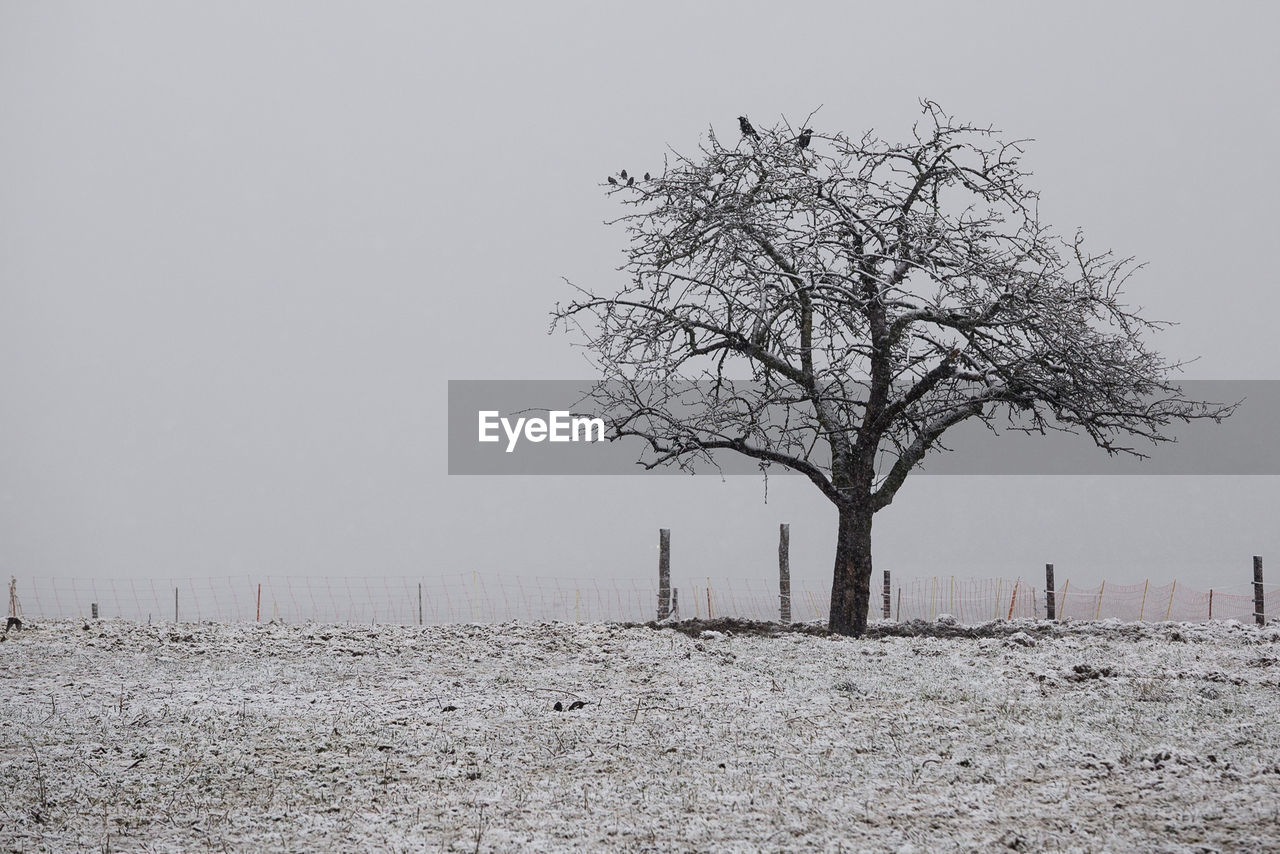 Bare trees on landscape against clear sky