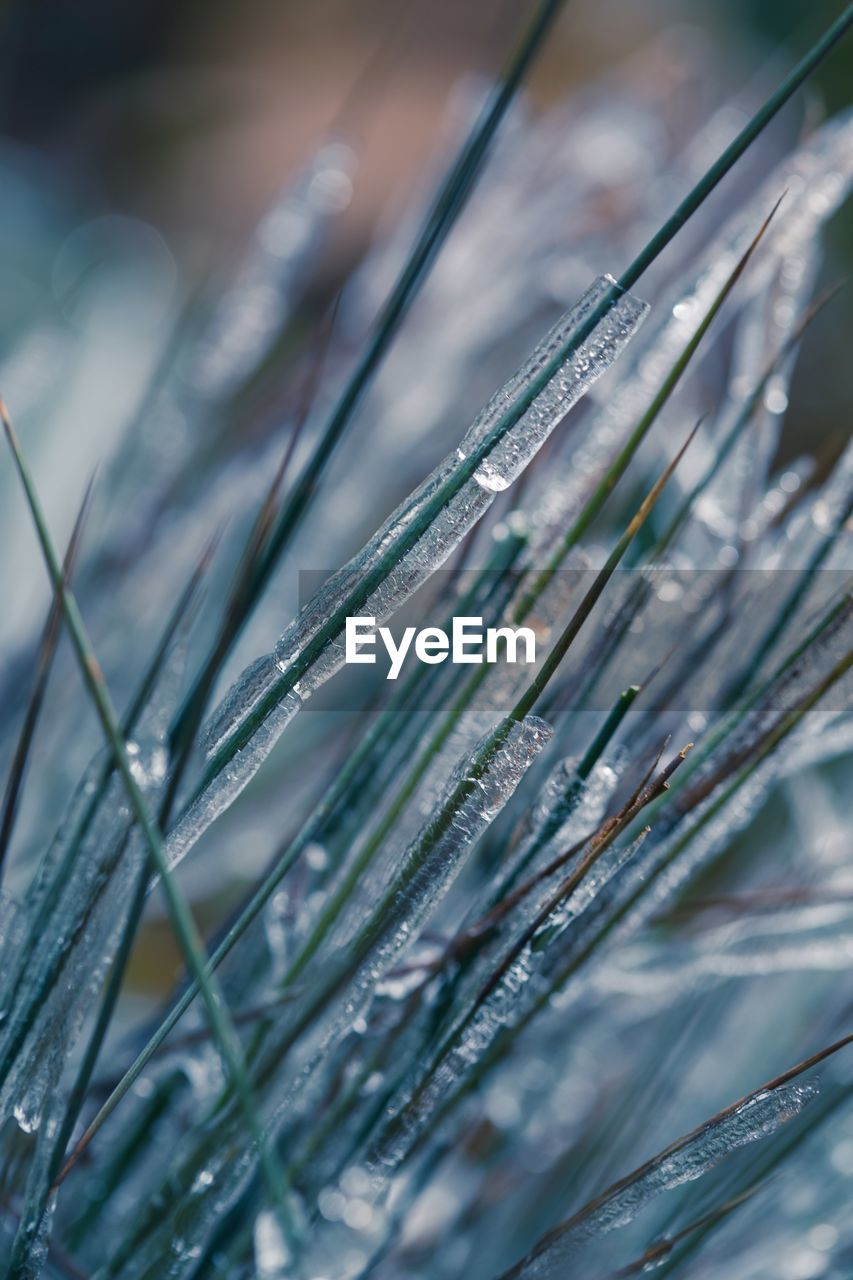 Close-Up Of Frozen Grass During Winter