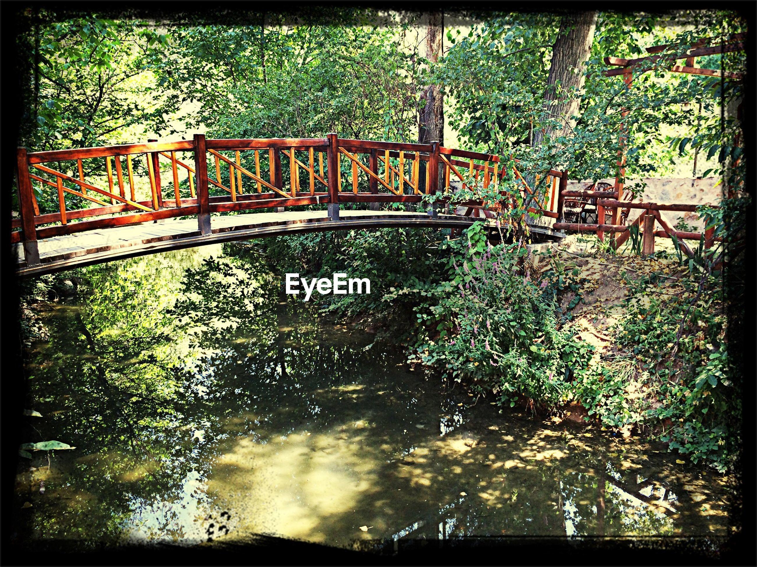 Footbridge over pond in forest