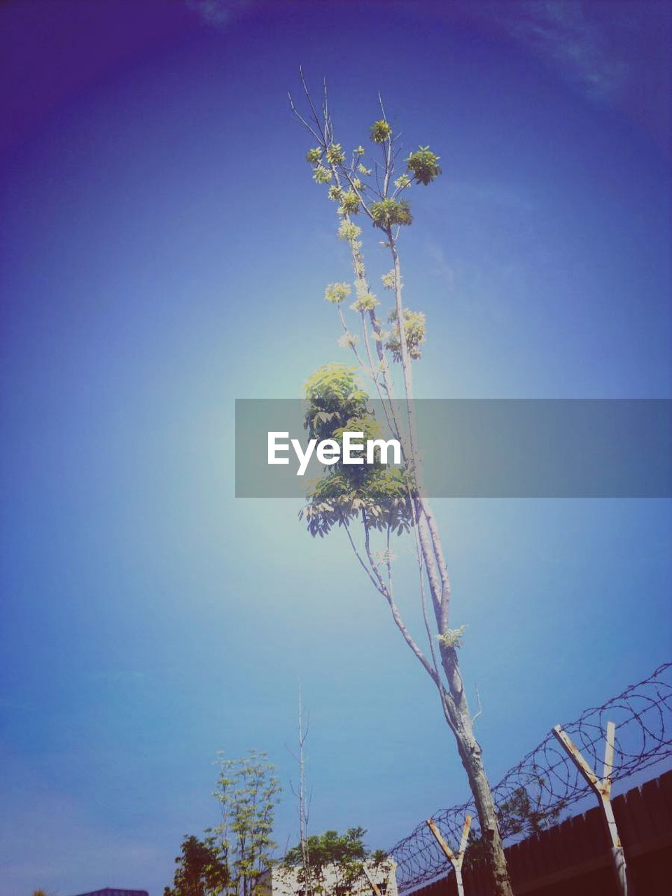 flower, tree, growth, nature, fragility, beauty in nature, clear sky, blue, no people, low angle view, day, blossom, branch, outdoors, freshness, plant, sky, springtime, close-up, flower head