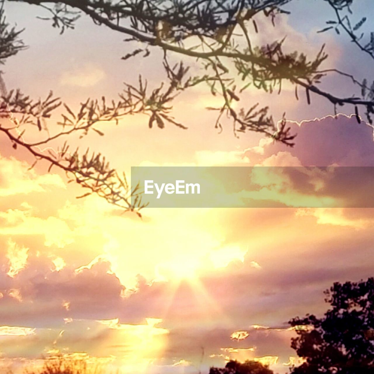 sky, sunset, nature, beauty in nature, low angle view, cloud - sky, outdoors, no people, scenics, tranquility, tree, tranquil scene, silhouette, growth, day