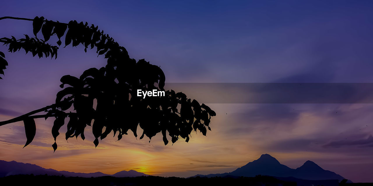 sky, sunset, silhouette, beauty in nature, cloud - sky, tranquility, nature, tranquil scene, scenics - nature, plant, tree, growth, no people, low angle view, mountain, outdoors, dusk, non-urban scene, leaf, plant part