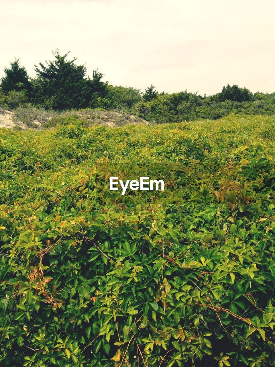 plant, growth, green color, beauty in nature, tranquility, nature, tree, land, no people, sky, day, field, tranquil scene, landscape, leaf, plant part, scenics - nature, environment, outdoors, non-urban scene