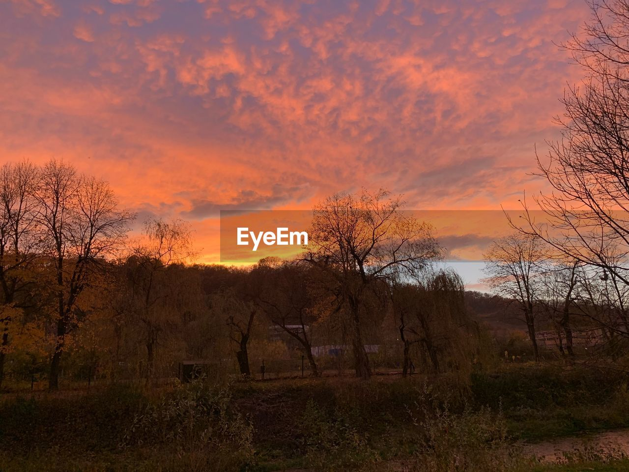 sunset, tree, sky, tranquil scene, plant, beauty in nature, tranquility, cloud - sky, scenics - nature, orange color, field, no people, land, non-urban scene, nature, bare tree, environment, landscape, growth, idyllic, outdoors