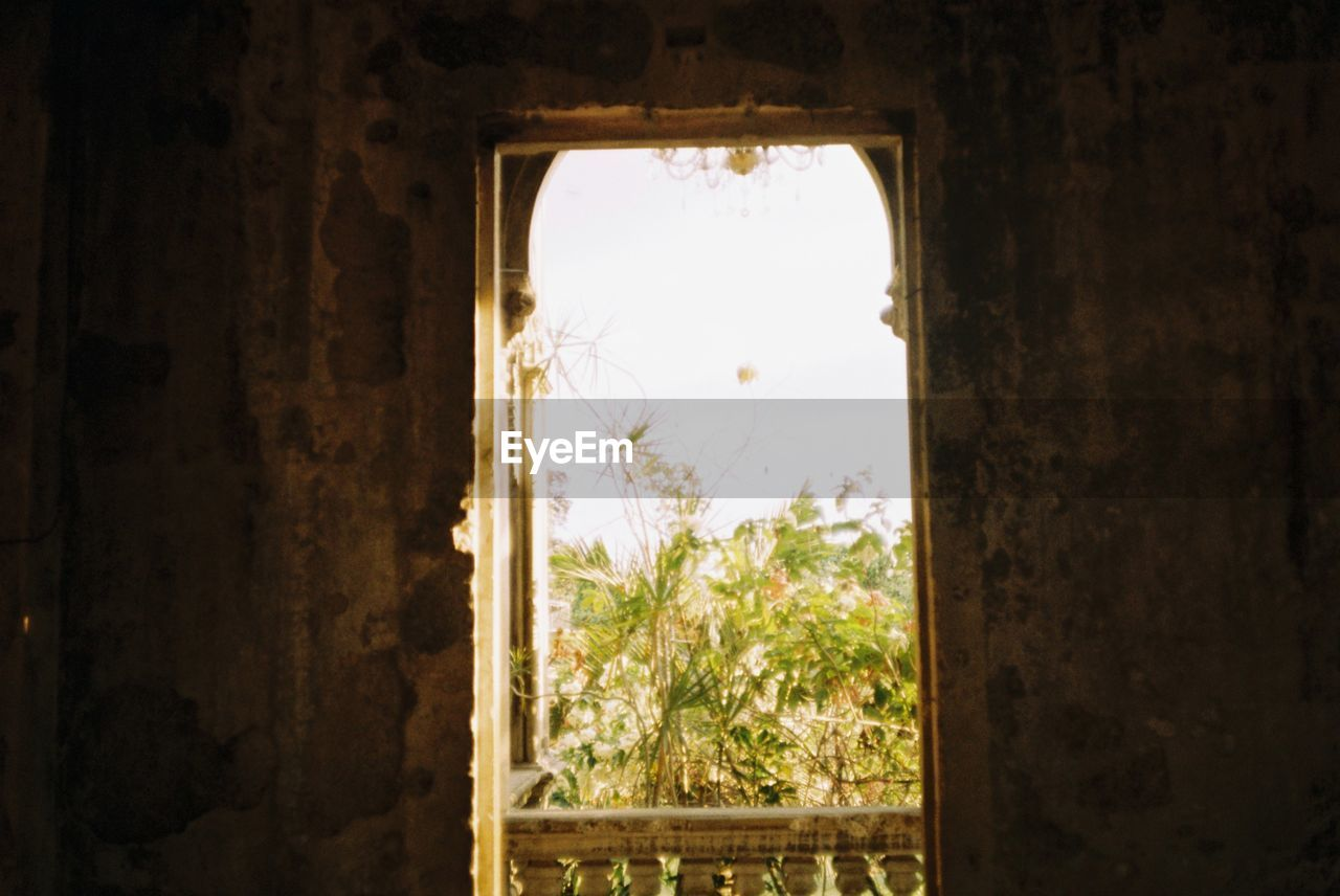 plant, window, indoors, architecture, no people, day, built structure, tree, nature, sky, building, old, wall - building feature, abandoned, run-down, damaged, growth, history, obsolete, deterioration, ruined
