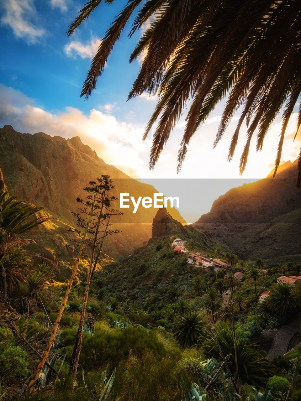 sky, mountain, plant, scenics - nature, beauty in nature, tranquility, tranquil scene, tree, nature, cloud - sky, palm tree, growth, sunset, no people, tropical climate, non-urban scene, environment, mountain range, idyllic, landscape, outdoors, palm leaf, coconut palm tree, mountain peak