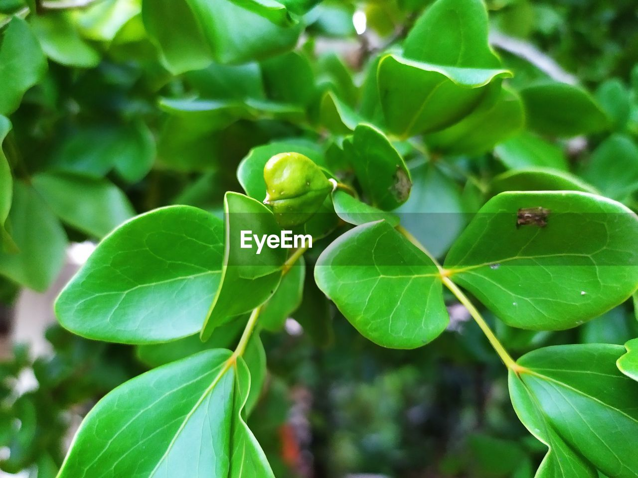 plant part, leaf, growth, green color, plant, close-up, day, focus on foreground, beauty in nature, no people, nature, freshness, food and drink, outdoors, food, selective focus, high angle view, leaves, fragility, vulnerability