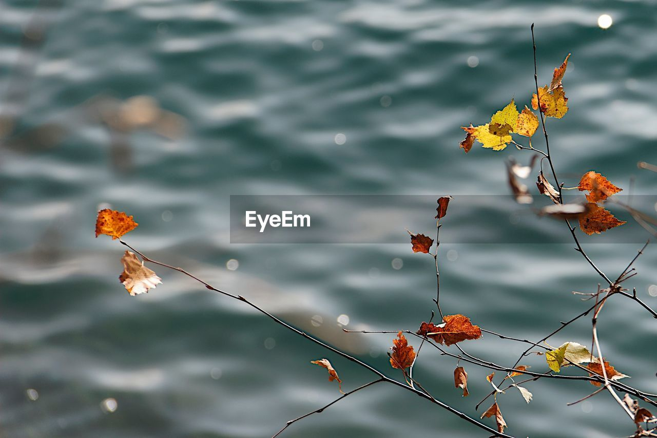 High Angle View Of Autumn Plant Against Lake