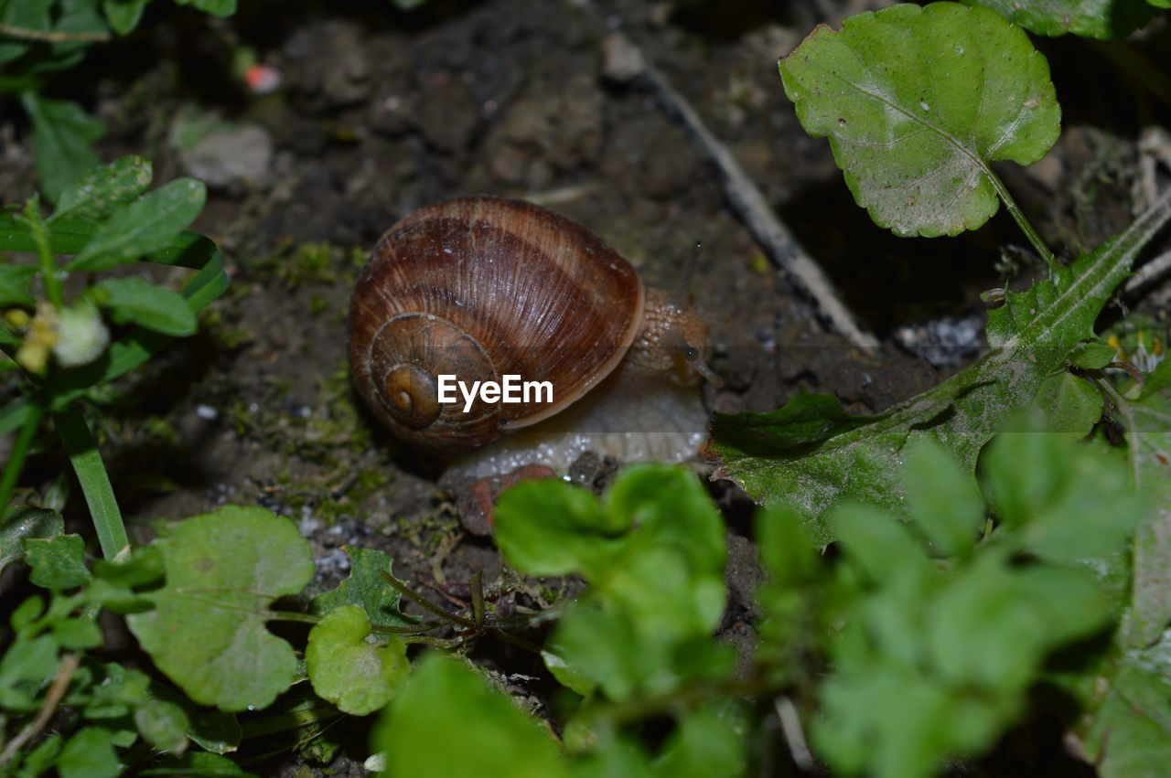 mollusk, animal, gastropod, invertebrate, animal themes, animal wildlife, plant part, shell, leaf, snail, one animal, animals in the wild, selective focus, animal shell, close-up, nature, no people, day, plant, boredom, outdoors, crawling, small