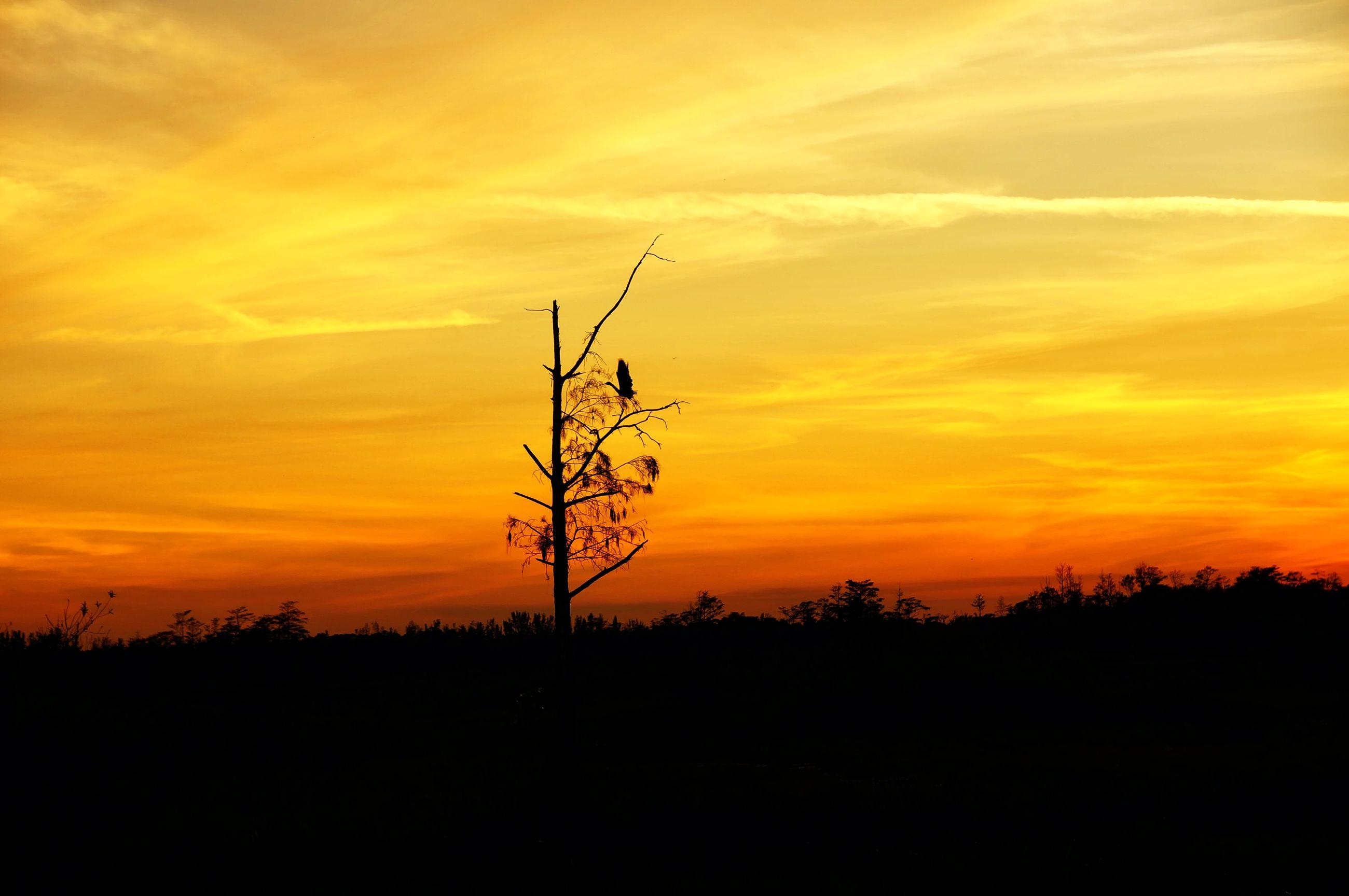 SILHOUETTE PLANTS ON LAND AGAINST ORANGE SKY