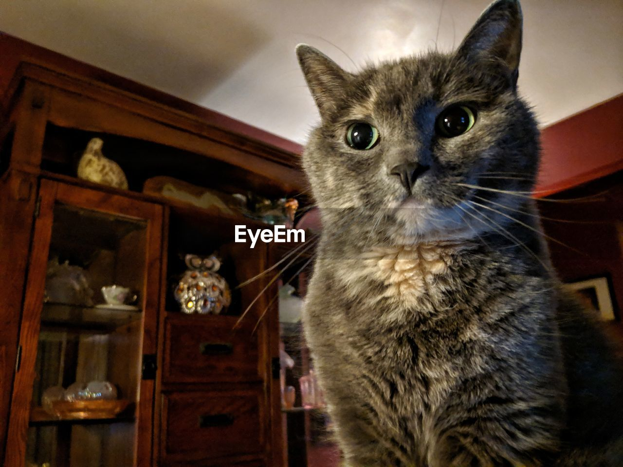 domestic cat, cat, domestic, pets, domestic animals, feline, animal, mammal, animal themes, indoors, one animal, vertebrate, no people, home interior, looking, portrait, shelf, whisker, low angle view, close-up, animal eye