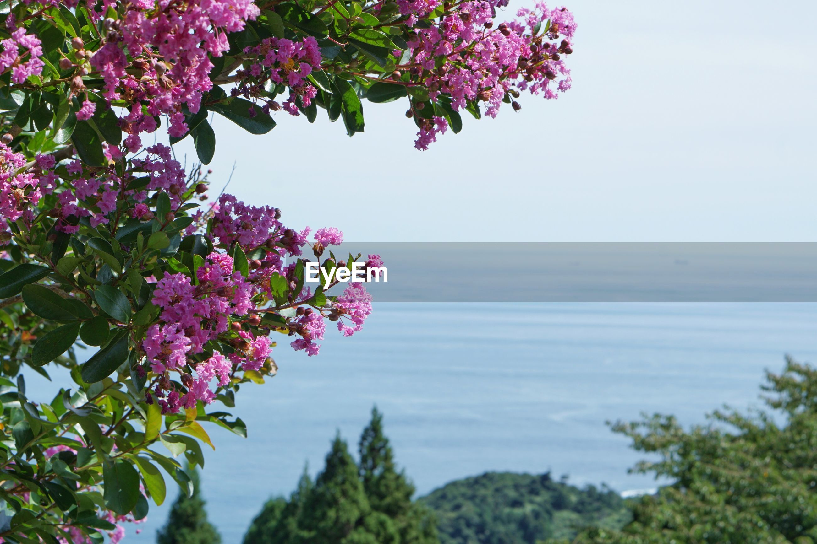 plant, flowering plant, flower, beauty in nature, growth, fragility, vulnerability, freshness, nature, sky, tree, day, pink color, water, sea, no people, horizon over water, focus on foreground, scenics - nature, outdoors, flower head, purple, lilac, bunch of flowers