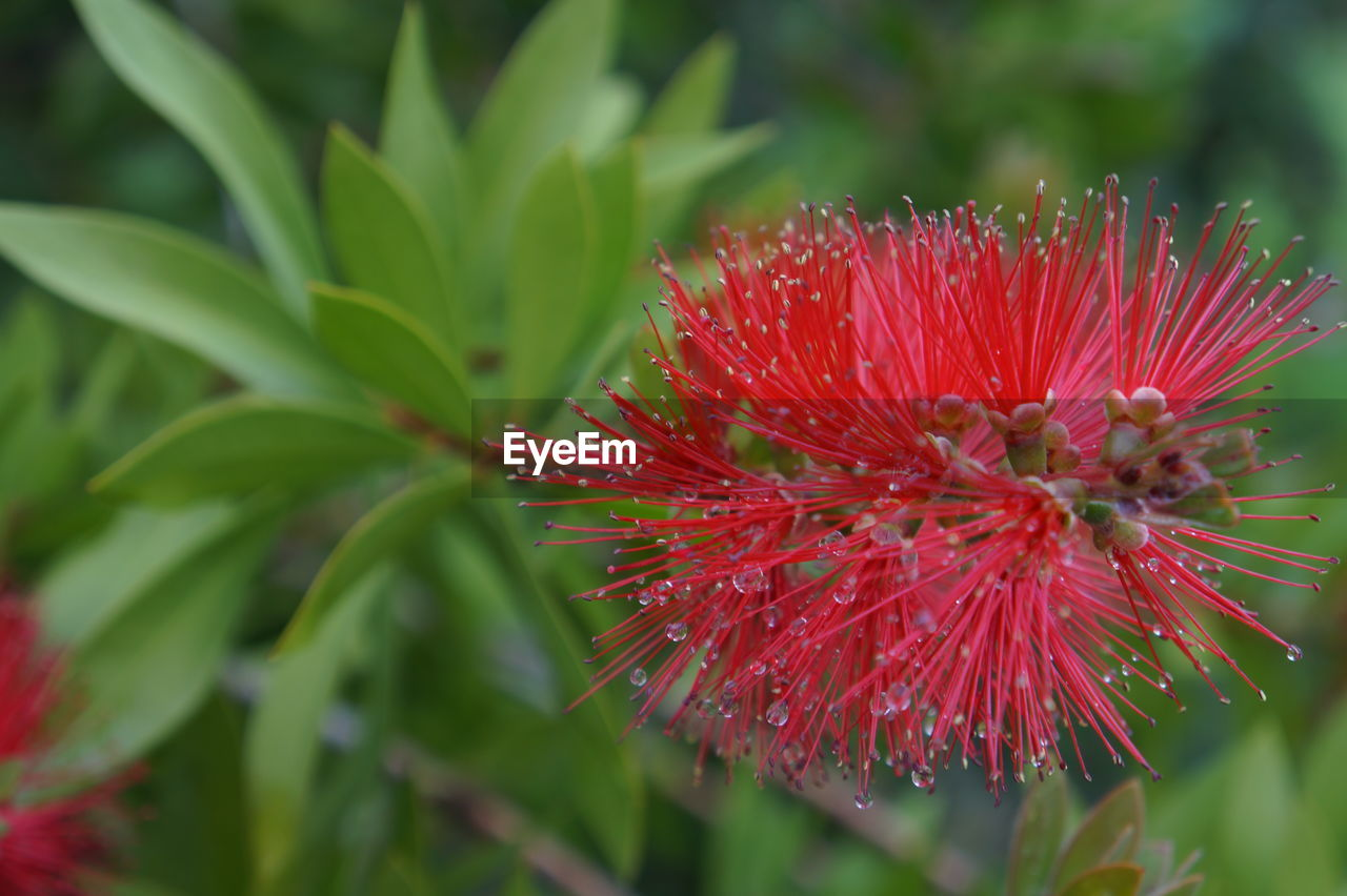growth, flower, red, nature, fragility, plant, freshness, petal, flower head, beauty in nature, close-up, no people, outdoors, day, blooming