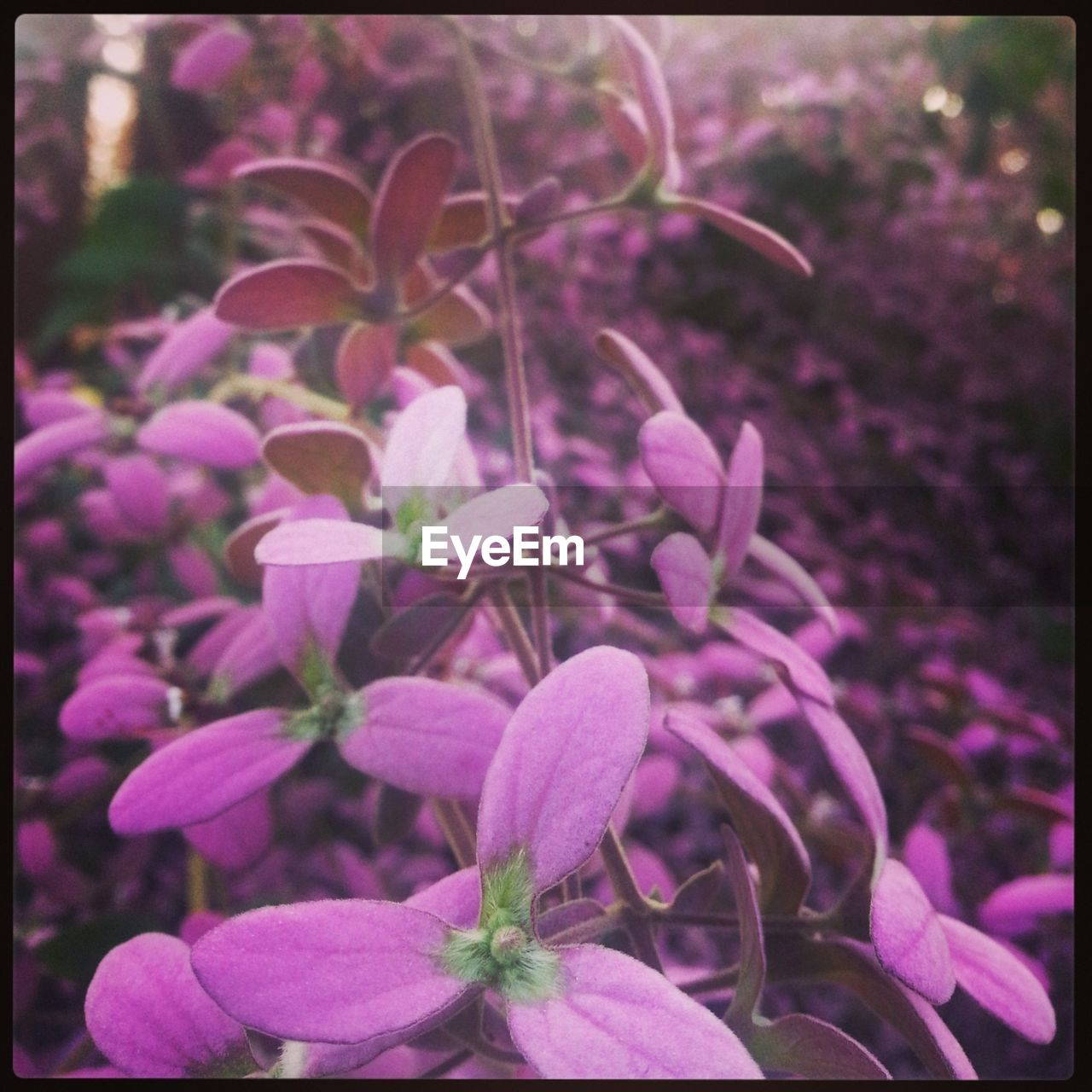 growth, flower, plant, nature, fragility, beauty in nature, petal, freshness, no people, pink color, blooming, outdoors, close-up, day, flower head