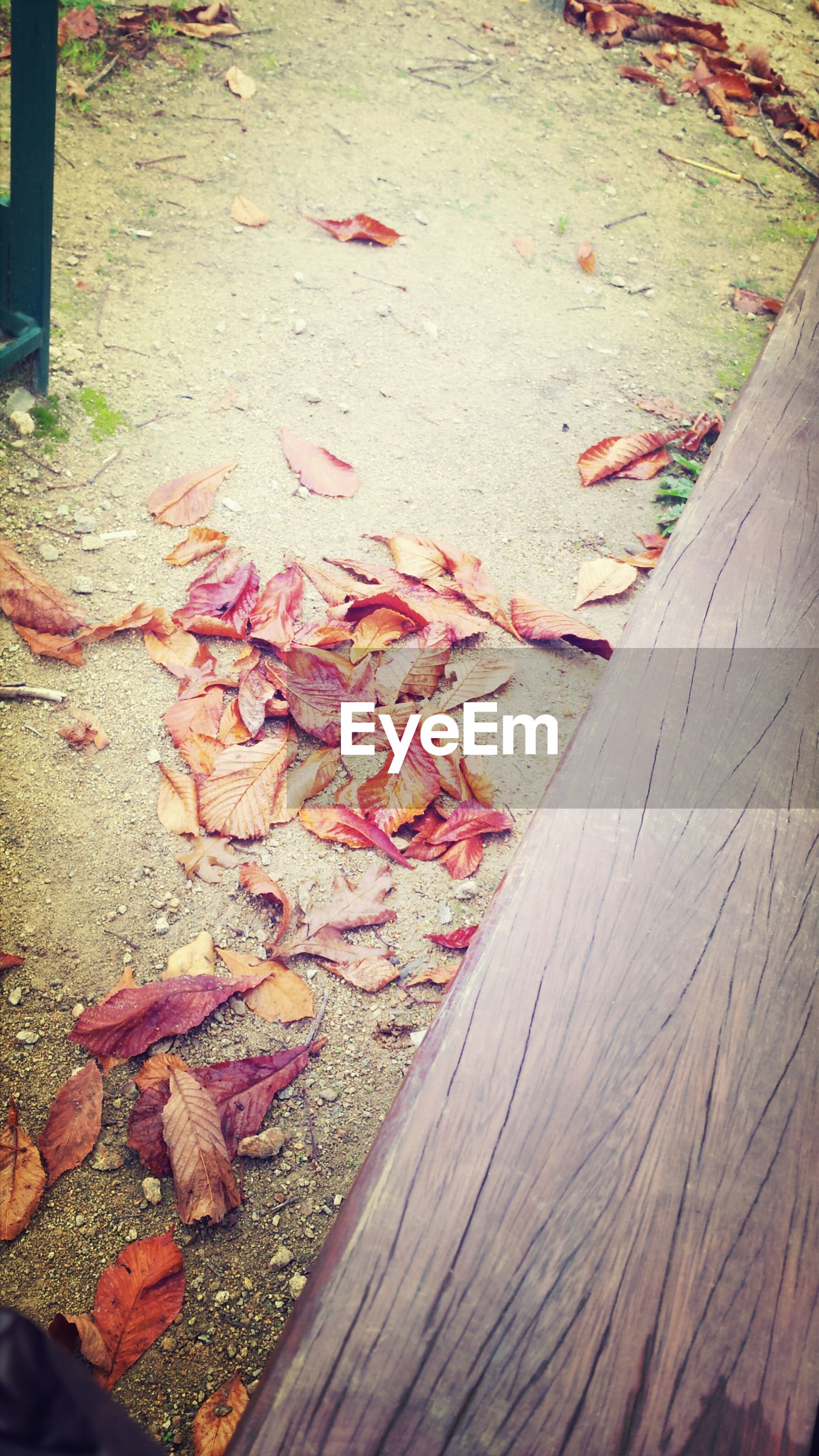 high angle view, autumn, leaf, wood - material, red, change, fallen, leaves, season, abundance, dry, day, outdoors, nature, wooden, ground, no people, sunlight, close-up, falling