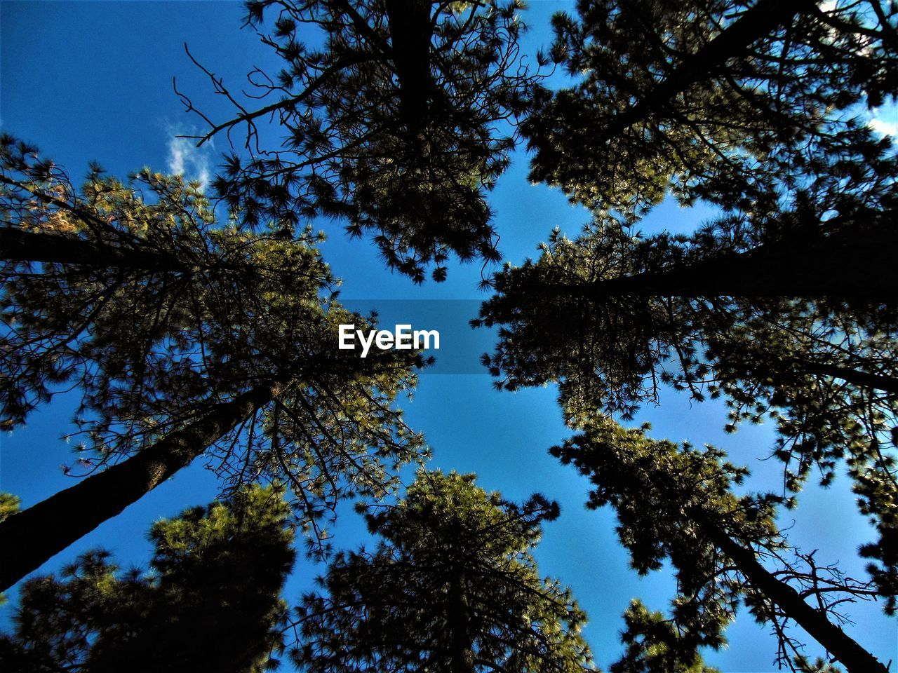 tree, low angle view, growth, branch, nature, beauty in nature, day, no people, sky, clear sky, outdoors