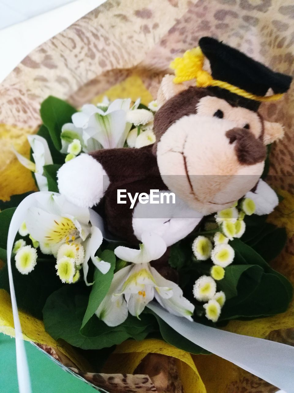 flower, stuffed toy, toy, indoors, teddy bear, no people, close-up, freshness, fragility, nature, day