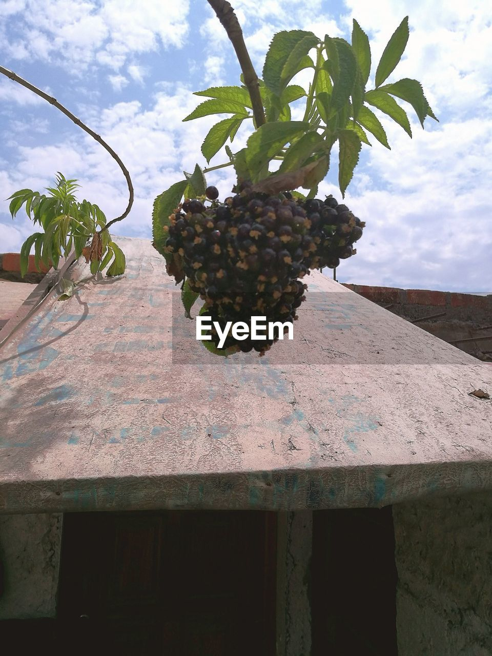 growth, day, no people, sky, nature, low angle view, outdoors, hanging, tree, fruit, plant, architecture, freshness